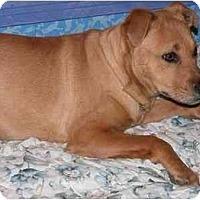 Adopt A Pet :: Jake - Gilbert, AZ