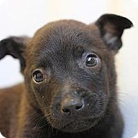 Adopt A Pet :: Newton - Roosevelt, UT