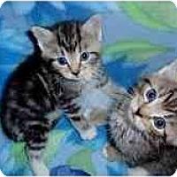 Adopt A Pet :: Lacey & Lucas - Arlington, VA