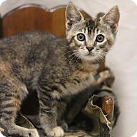Adopt A Pet :: Zoe - Sacramento, CA