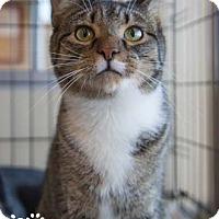 Adopt A Pet :: March - Merrifield, VA