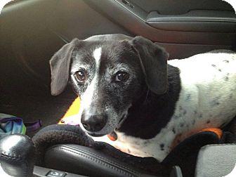Beagle Mix Dog for adoption in Marietta, Georgia - Russell