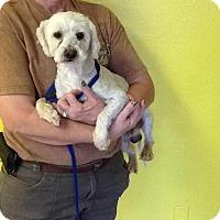 Adopt A Pet :: Axel - Phoenix, AZ