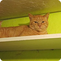 Adopt A Pet :: Orange Crush - Coos Bay, OR