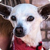 Adopt A Pet :: Blondie - San Marcos, CA