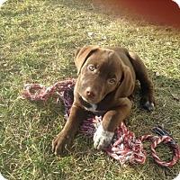 Adopt A Pet :: Tazzy - Saskatoon, SK