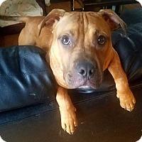 Adopt A Pet :: Noodles - Jerseyville, IL
