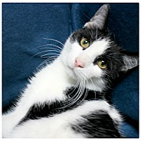 Adopt A Pet :: Thunder - Forked River, NJ