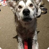 Adopt A Pet :: Mumble - Cavan, ON