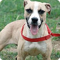 Adopt A Pet :: August - female - Godfrey, IL