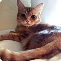 Adopt A Pet :: Max (adult) - Mesa, AZ