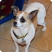 Adopt A Pet :: Priscilla - Mesa, AZ
