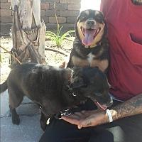 Adopt A Pet :: Toomie - El Cajon, CA