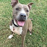 Adopt A Pet :: Rudolph - Gilbert, AZ