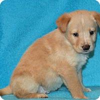Adopt A Pet :: **PRINCE** MEET APRIL 1ST! - Mukwonago, WI