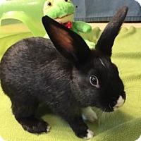 Adopt A Pet :: Feivel - Woburn, MA