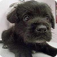Adopt A Pet :: Dixon - Pocahontas, AR