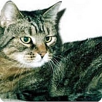 Adopt A Pet :: Jo Jo - Medway, MA