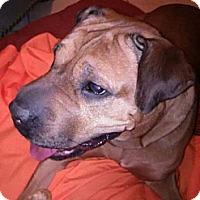 Adopt A Pet :: PEBBLES - Hollywood, FL