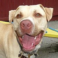 Adopt A Pet :: Simba - Carmel, NY