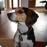 Adopt A Pet :: Jackson - Hamburg, PA