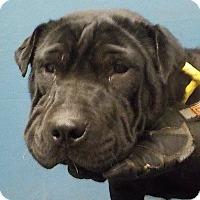 Adopt A Pet :: Minnie in MO - pending - Mira Loma, CA
