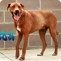 Adopt A Pet :: Timon - Cheyenne, WY