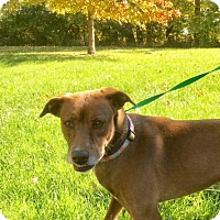 Adopt A Pet :: Delia - Albion, NY