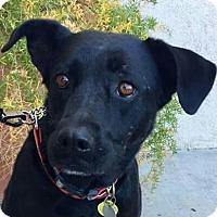 Adopt A Pet :: Marley - Tucson, AZ