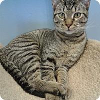 Adopt A Pet :: Charity - Lake Charles, LA