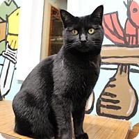Adopt A Pet :: Genevieve - West Des Moines, IA