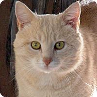 Adopt A Pet :: Conan - Maynardville, TN