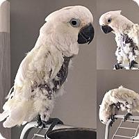 Adopt A Pet :: Banjo - Stratford, CT