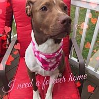 Adopt A Pet :: Dakota - Toms River, NJ
