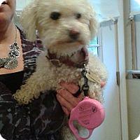 Adopt A Pet :: Penny - Sparta, NJ