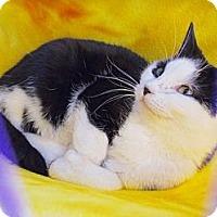Adopt A Pet :: Shilo - Hood River, OR