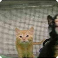 Adopt A Pet :: Ladon - Winter Haven, FL