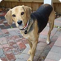 Adopt A Pet :: Eva - Portland, OR