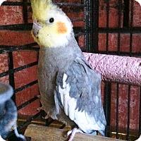 Adopt A Pet :: Happy - Lenexa, KS