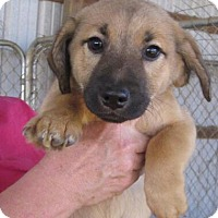 Adopt A Pet :: Prancer - Wilmington, DE