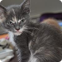 Adopt A Pet :: Margo - Byron Center, MI