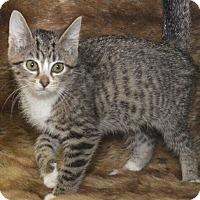 Adopt A Pet :: Tayla - Reston, VA