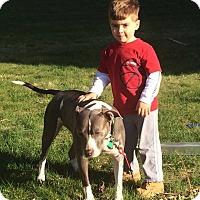 Adopt A Pet :: Gina - Acushnet, MA