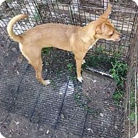 Adopt A Pet :: Red - Leesburg, FL