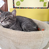 Adopt A Pet :: Lucky Star - Middletown, NY
