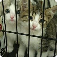 Adopt A Pet :: Punjab - Baltimore, MD