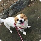 Adopt A Pet :: Wink