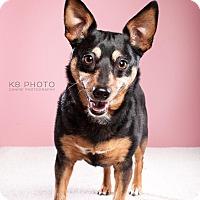 Adopt A Pet :: Tacobella - Homewood, AL