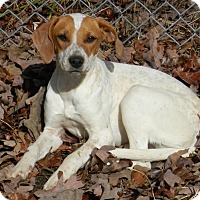 Adopt A Pet :: Taylor - Lawrenceburg, TN