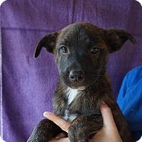 Adopt A Pet :: Puff - Oviedo, FL